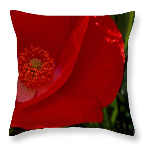 Red Throw Pillow featuring the photograph Red Poppies by Paul W Faust - Impressions of Light
