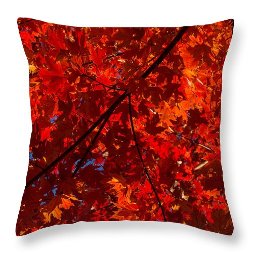 Red Throw Pillow featuring the photograph Red Red And Red by Georgia Mizuleva