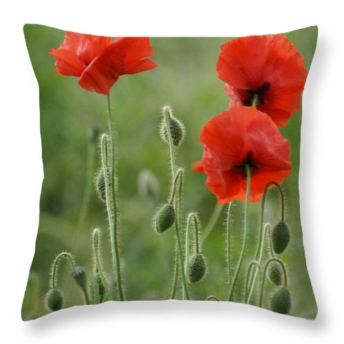 Poppies Throw Pillow featuring the photograph Red Red Poppies 1 by Carol Lynch