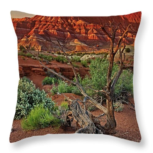 North America Throw Pillow featuring the photograph Red Rock Butte And Juniper Snag Paria Canyon Utah by Dave Welling
