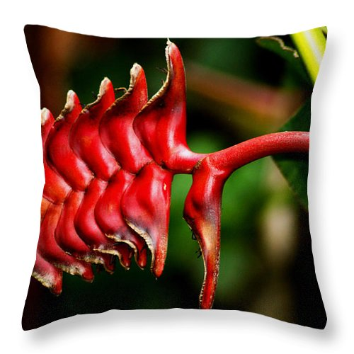 Flower Throw Pillow featuring the photograph Red Scales by Brian Kerls