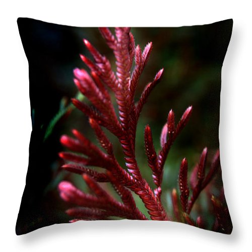 Selanginella Throw Pillow featuring the photograph Red Selaginella by Nathan Abbott