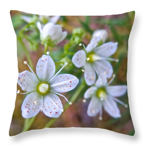 Red-spotted Saxifrage Along Horseshoe Lake Trail In Denali Np Throw Pillow featuring the photograph Red-spotted Saxifrage Along Horseshoe Lake Trail In Denali Np-ak by Ruth Hager