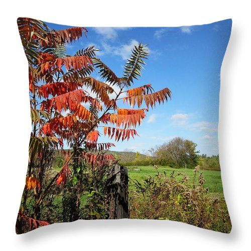 Field Throw Pillow featuring the photograph Red Sumac Tree by MTBobbins Photography