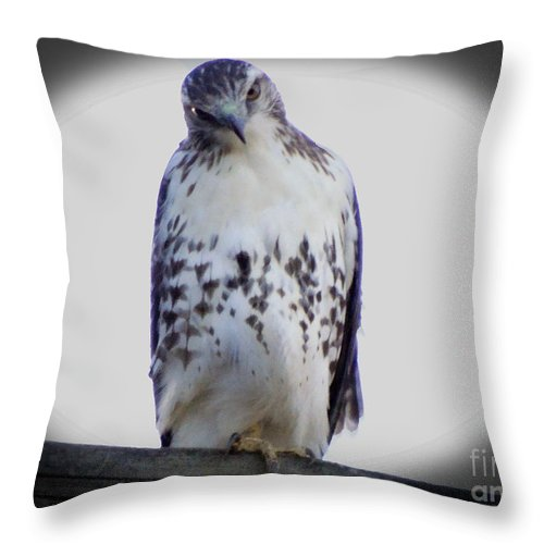 Red Tail Hawk Throw Pillow featuring the photograph Red Tail Hawk Looking Curious by Gena Weiser