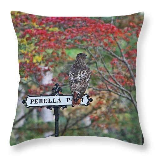 Hawk Throw Pillow featuring the photograph Red Tail Hawk by Michael Saunders