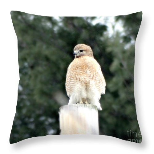 Red Tail Hawk Throw Pillow featuring the photograph Red Tail Hawk Waiting On A Pole by Gena Weiser