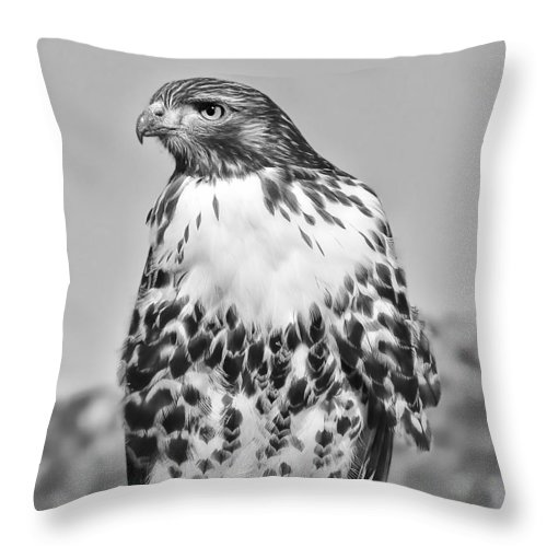 Hawk Throw Pillow featuring the photograph Red Tail Hawk Youth Black And White by Jennie Marie Schell