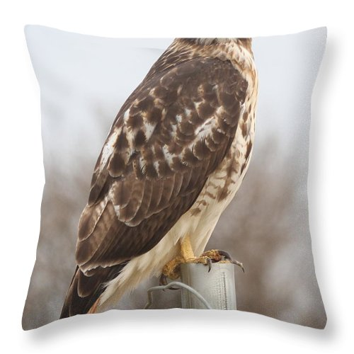 Raptor Throw Pillow featuring the photograph Red-tailed Hawk by Ken Keener