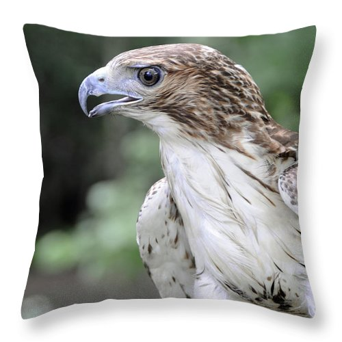 Kenny Francis Throw Pillow featuring the photograph Red Tailed Hawk by Kenny Francis