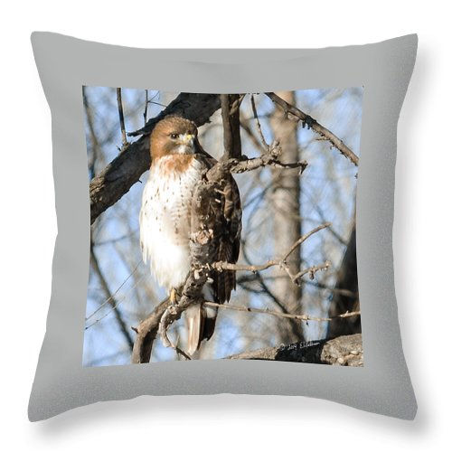 Standing Bear Throw Pillow featuring the photograph Red-tailed Hawk Looking by Edward Peterson