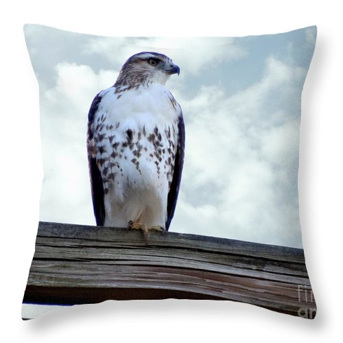 Red Tail Hawk Throw Pillow featuring the photograph Red Tailed Hawk Waiting by Gena Weiser