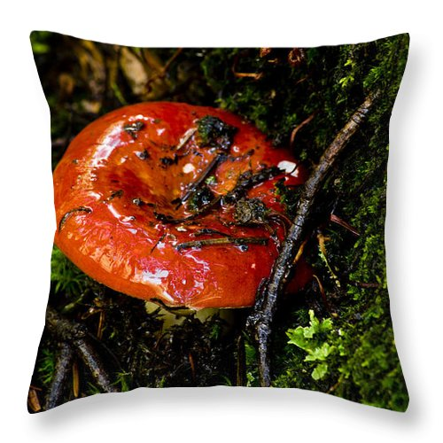 Mushroom Throw Pillow featuring the photograph Red Toadstool by Patrick Moore