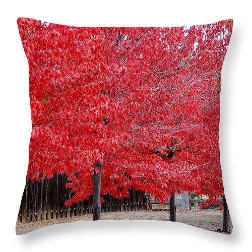 Red Leaves Leaf Tree Fall Colors Row Line Chico Ca Throw Pillow featuring the photograph Red Tree Line by Holly Blunkall