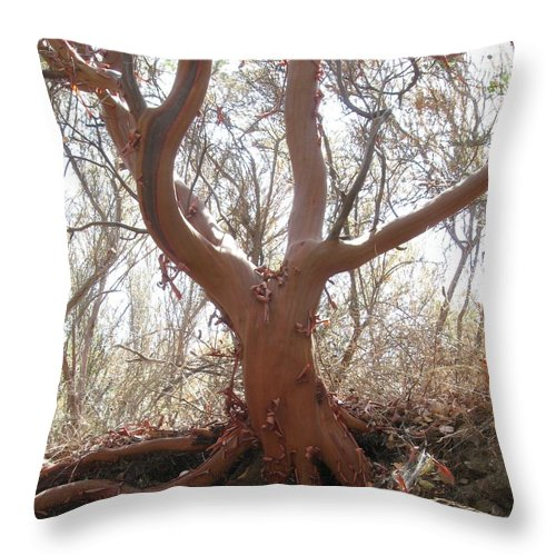 Nature Throw Pillow featuring the photograph Red Tree by Scott Richards