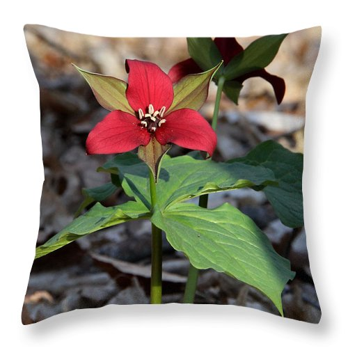 Red Trillium Throw Pillow featuring the photograph Red Trillium by Doris Potter