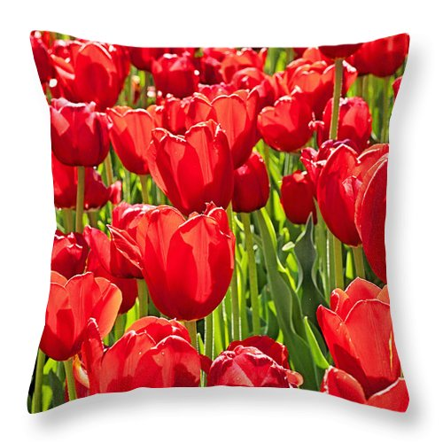 Flower Throw Pillow featuring the photograph Red Tuilip Bed by Michael Porchik