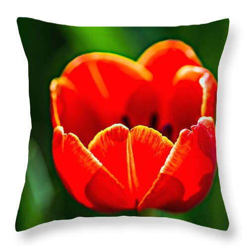 Tulip Throw Pillow featuring the photograph Red Tulip by Alexander Senin
