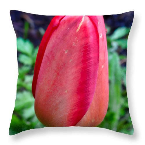 Photo Throw Pillow featuring the photograph red tulip may by Leif Sohlman by Leif Sohlman