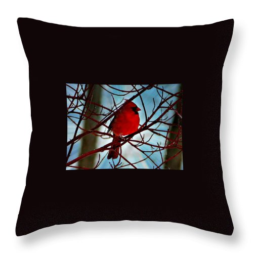 Macro Throw Pillow featuring the photograph Red White And Blue Cardinal by Barbara S Nickerson