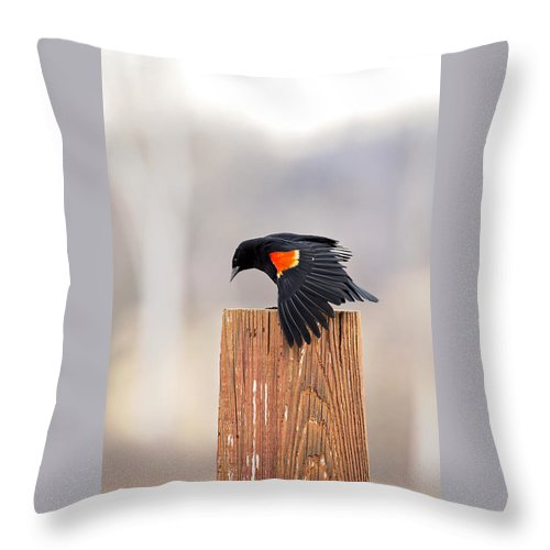 Black Bird Throw Pillow featuring the photograph Red Wing Black Bird On Post by Deb Buchanan
