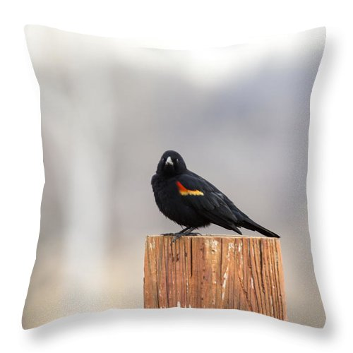 Red Wing Black Bird Throw Pillow featuring the photograph Red Wing Black Bird On Post IIi by Deb Buchanan