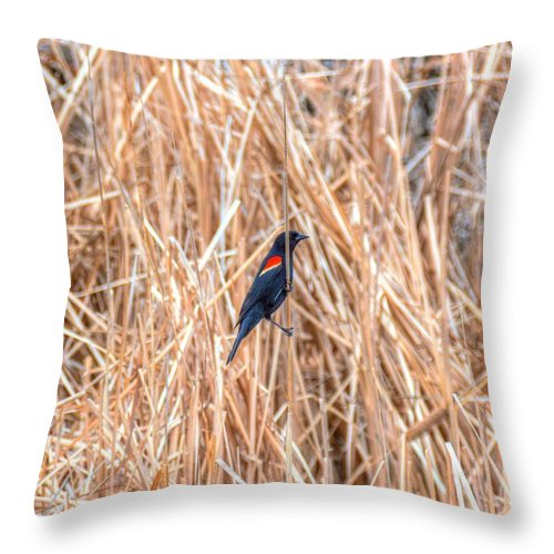 Red Wing Blackbird Throw Pillow featuring the photograph Red Wing Blackbird by M Dale