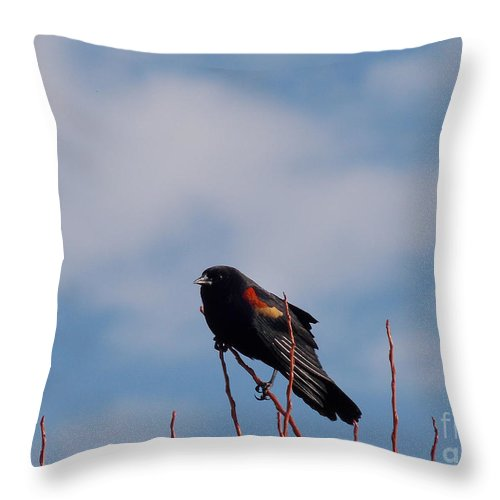 Names Of Birds Throw Pillow featuring the photograph Red Wing Blackbird by Skip Willits