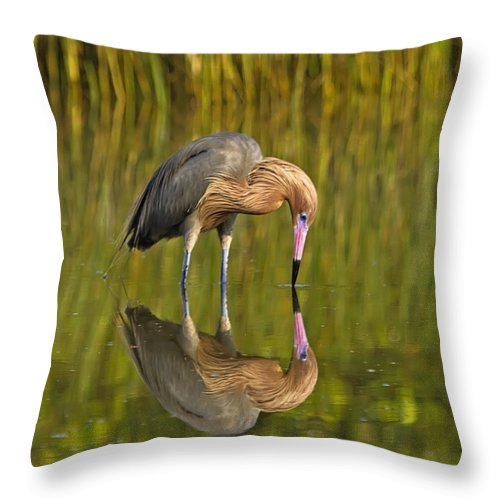 Reddish Egret Throw Pillow featuring the photograph Reddish Egret Reflection by John Vose
