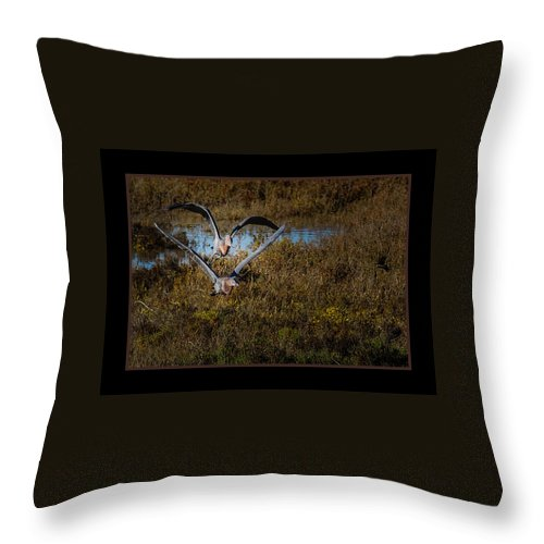 Birds Throw Pillow featuring the photograph Reddish Egrets by Ernie Echols