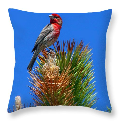 Colorado Throw Pillow featuring the photograph Redheaded Tree Topper by Bob Hislop