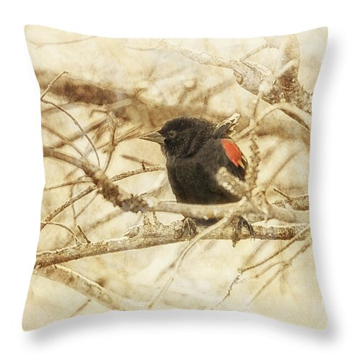 Red-winged Blackbird Throw Pillow featuring the photograph Redwing In The Wind by Susan Capuano