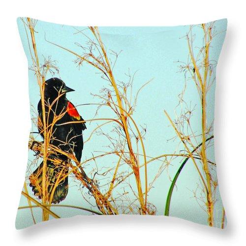 Redwing Blackbird Throw Pillow featuring the photograph Redwing Lacassine by Lizi Beard-Ward
