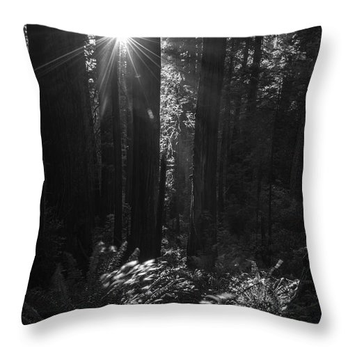 Redwood Tree Throw Pillow featuring the photograph Redwood Sunburst Monochrome by Vishwanath Bhat