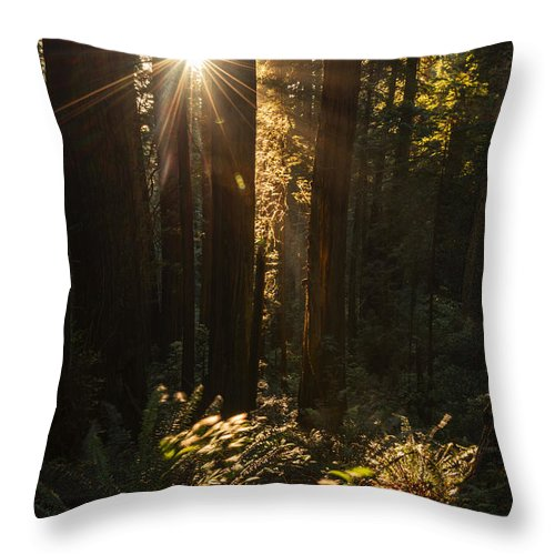 Redwood Tree Throw Pillow featuring the photograph Redwood Sunburst by Vishwanath Bhat
