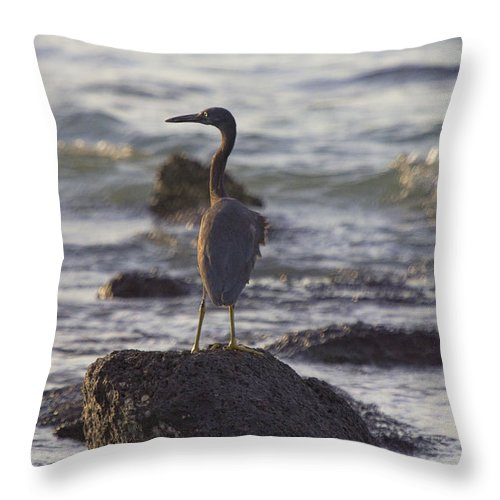 Reef Egret Throw Pillow featuring the photograph Reef Egret by Douglas Barnard