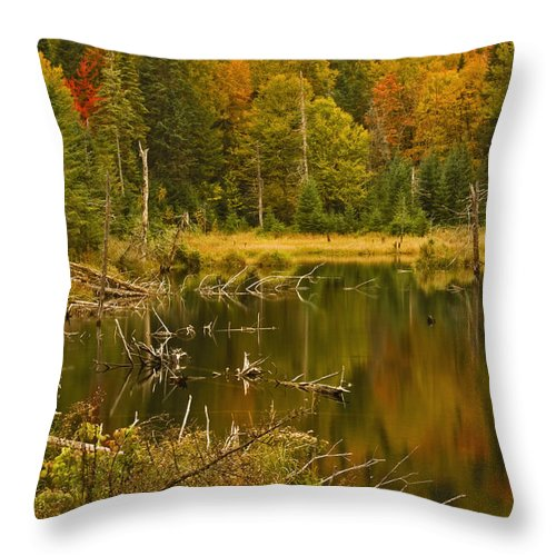 Water Throw Pillow featuring the photograph Reflections Of The Fall by Hany J