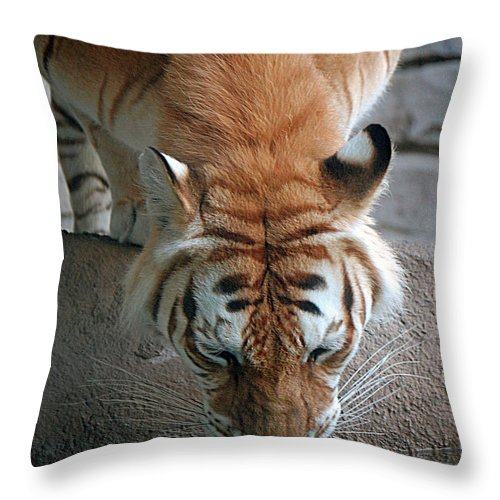 Tiger Throw Pillow featuring the digital art Reflections Of The Wild by DigiArt Diaries by Vicky B Fuller