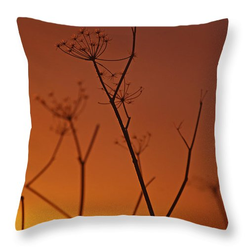 Queen Annes Lace Throw Pillow featuring the photograph Regal Old Queen by Jani Freimann