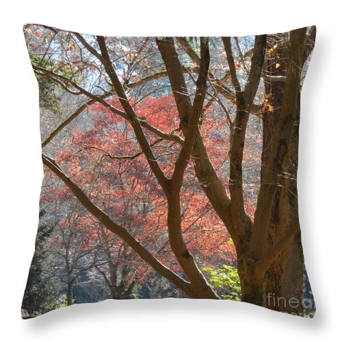 Sunlight Throw Pillow featuring the photograph Remnants Of Last Fall by Anita Adams