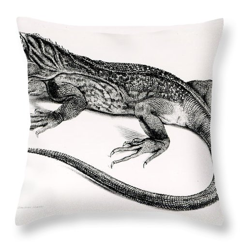 Lizard Throw Pillow featuring the painting Reptile by English School