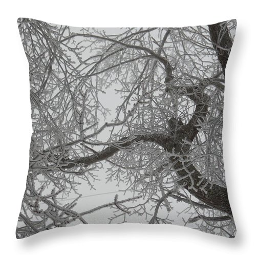 Tree Throw Pillow featuring the photograph Rescue Me From This Winter by Diannah Lynch