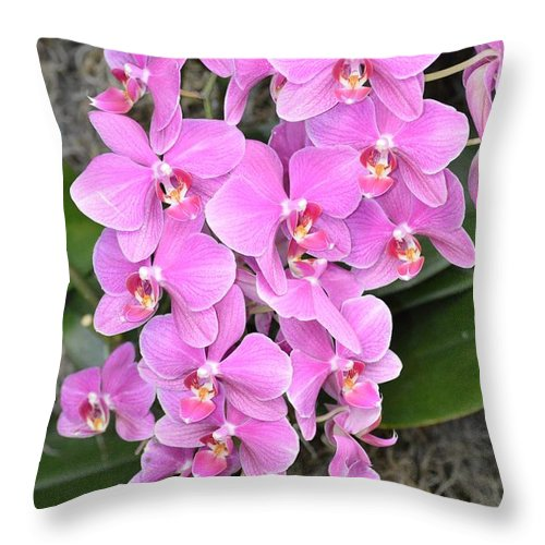 Awesome Orchid Throw Pillow featuring the photograph Resplendent Orchid by Sonali Gangane