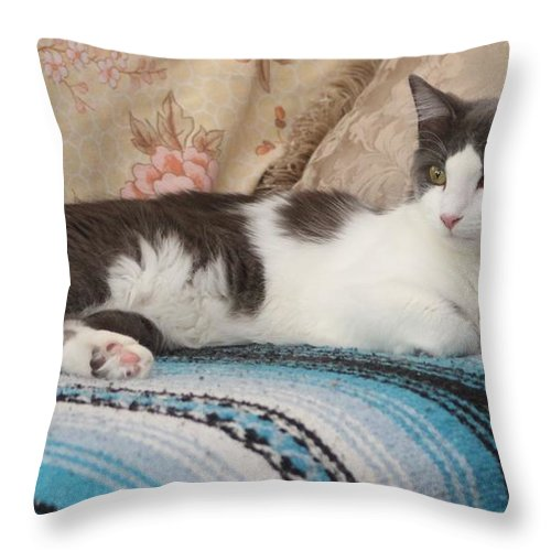 Cat Throw Pillow featuring the photograph Resting Cat by Michelle Powell