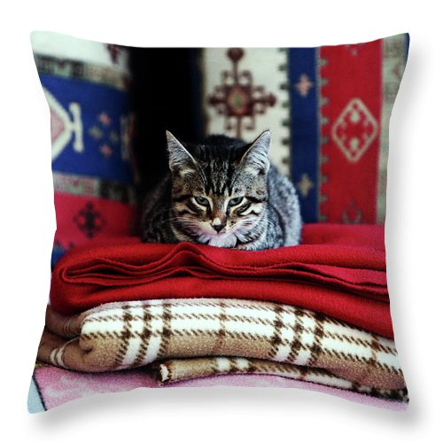 Resting In Istanbul Throw Pillow featuring the photograph Resting In Istanbul by John Rizzuto