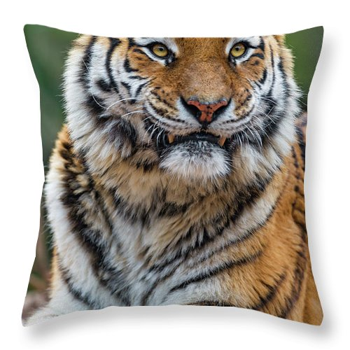Animal Themes Throw Pillow featuring the photograph Resting Toundra by Picture By Tambako The Jaguar