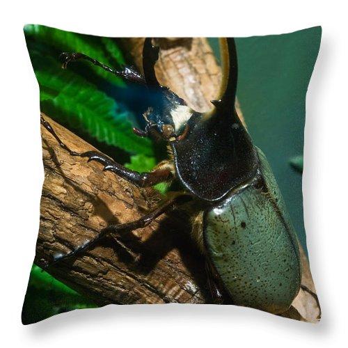 Rhinoceros Throw Pillow featuring the photograph Rhinoceros Beetle by Douglas Barnett