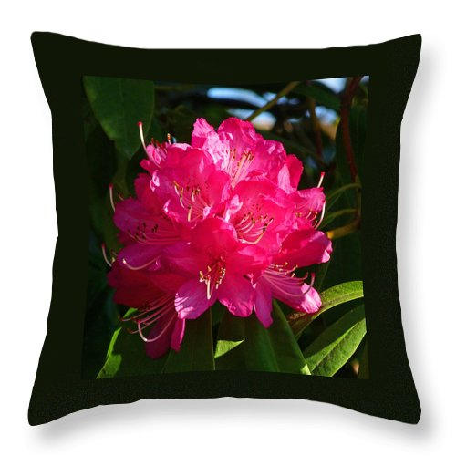 Rhododendron Throw Pillow featuring the photograph Rhododendron Glow by Margaret Saheed
