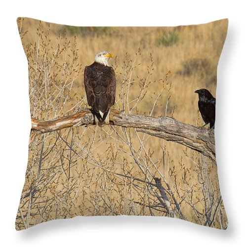 Bald Eagle Throw Pillow featuring the photograph Rich Man-poor Man by Jim Garrison