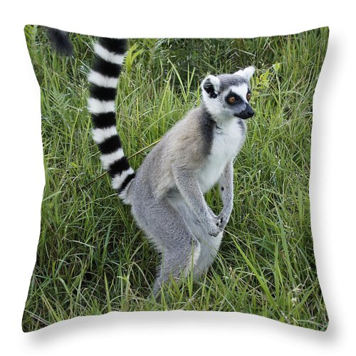 Africa Throw Pillow featuring the photograph Ring-tailed Lemur by Michele Burgess